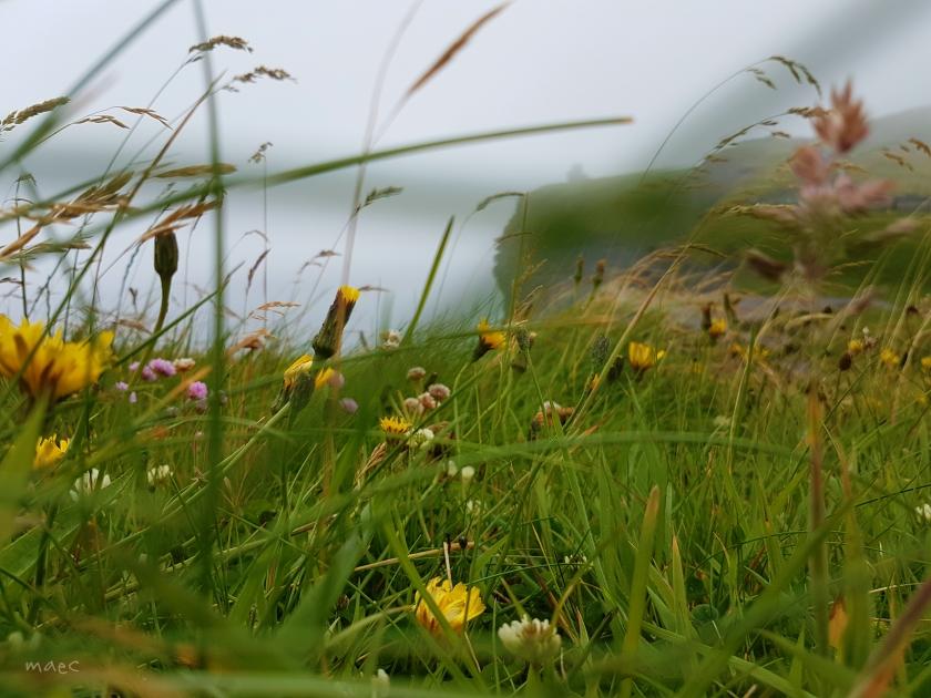 focus flower